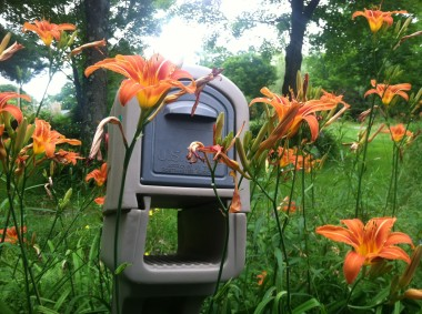 Day Lily Mail
